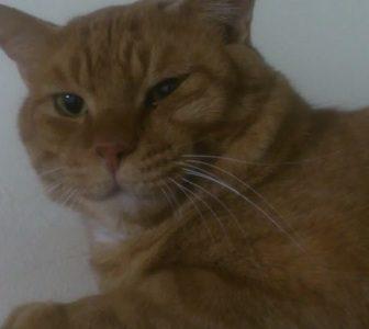 迷子の猫を探しています~下松市
