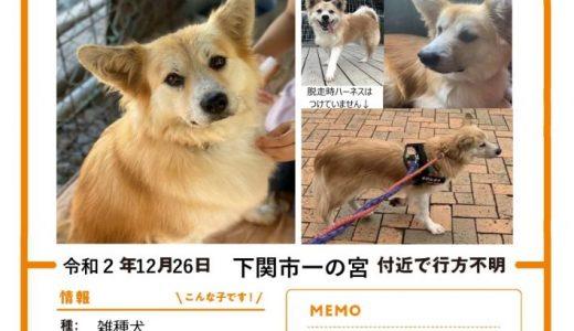 犬が迷子になっています(新下関駅南口付近) 再再投稿