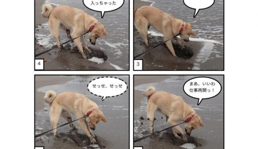 ワカメ探索犬
