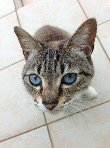 迷子の猫がいます ~周南市