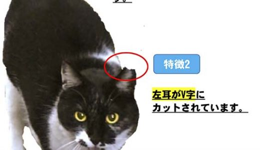 迷子猫さんがいます ( 光市室積 市延、東の庄付近 )→ 無事におうちに戻りました。