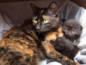 1ヵ月のクロちゃんと、母親ルナちゃん