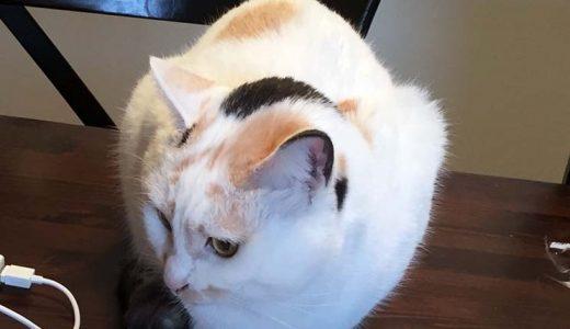 迷子猫さんがいます (防府市三田尻1丁目)
