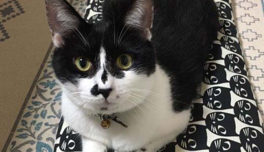 迷子猫さんがいます ( 山口県下松市 高速道路の下松SA上り ) →お迎えがありました。