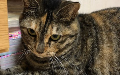 迷子猫さんがいます (山口県下松市末武中 末武川付近)→ 無事に保護されました !