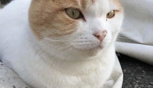 迷子猫さんがいます (岩国市錦見6丁目付近)→保護され家猫さんとして過ごしていることが分かりました!