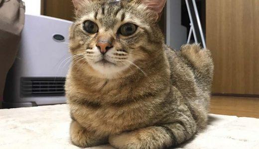 迷子猫さんがいます (下松市末武上 花岡駅付近)