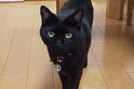 迷子猫さんがいます ( 周南市須々万本郷 )→無事にお家に帰りました!