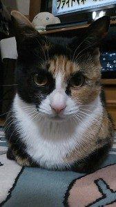★★岩国市★★  迷子の猫さん探しています!!