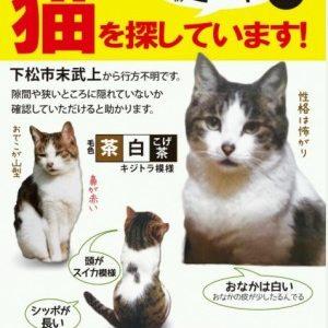 猫が行方不明です(下松市末武下・再掲載)