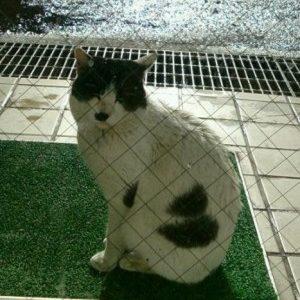 猫が迷子になっています➡無事に保護されました