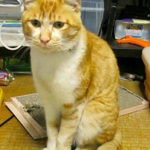 猫が迷子になっています(美祢市大嶺町)