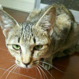 猫が保護されています(周南市今宿公園) →保護主さんがご家族に迎えられました。
