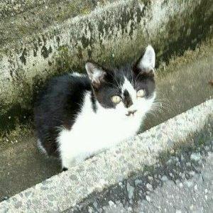 子猫を探しています(光市三井)