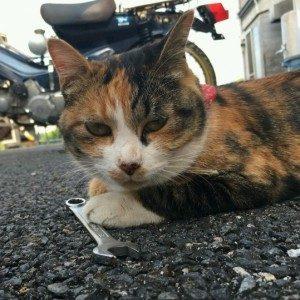 猫が迷子になっています(下松市山田)