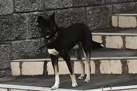 迷子犬の情報(光市虹ヶ丘)