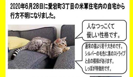 迷子猫さんがいます ( 岩国市愛宕町3丁目 ) → 無事におうちに戻りました。