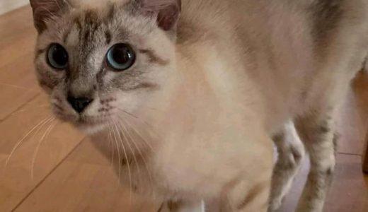 迷い猫が保護されています(周南市夢ヶ丘)→解決。お家に帰りました