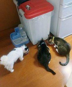 ワンニャンズ3匹ちゃん達