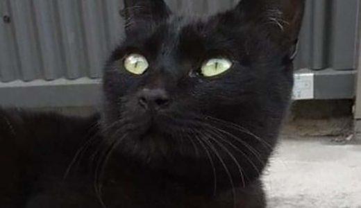 周南市野村 で迷い猫さんがいます。